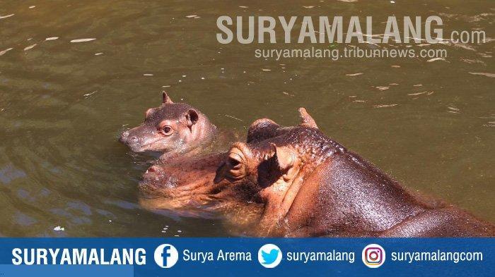 Jatim Park 2 Ikut Kampanye Global Species Management Plans (GSMP), Selamatkan Satwa Nyaris Punah