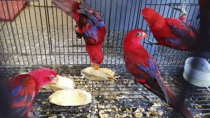 BBKKP Surabaya Gagalkan Penyelundupan 74 Burung Tanpa Dokumen dari Makasar