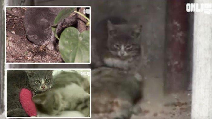 Bisakah Kamu Menahan Air Mata Melihat Video Anak Kucing ini? Lihat Perjuangan Dia 'Hidupkan' Ibunya