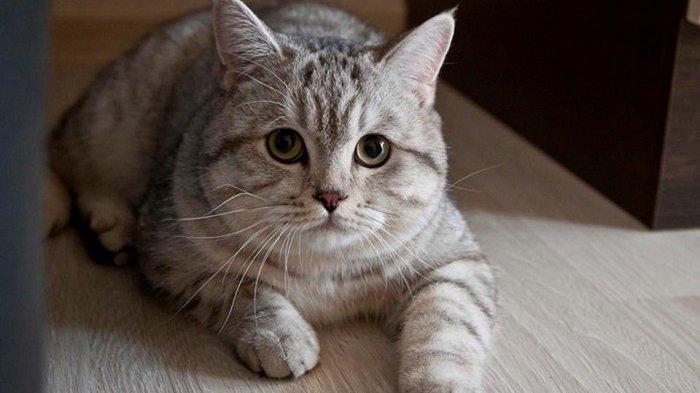 Daftar Kucing yang Paling Panjang Umur, Ada yang Sampai 20 Tahun