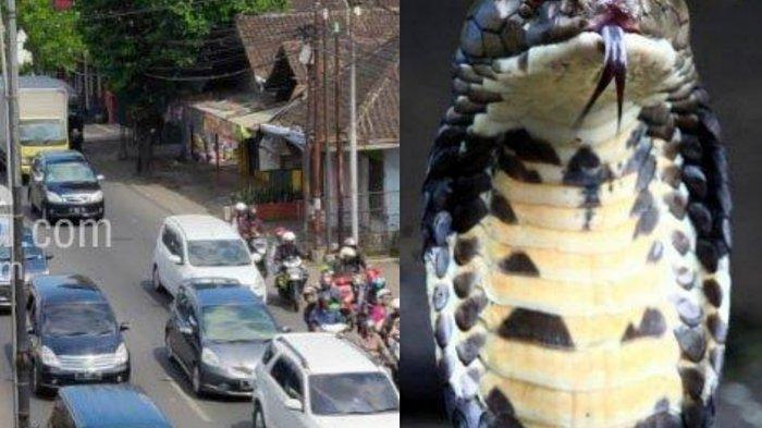 Berita Malang Hari Ini Populer, Pengalihan Jalan Untuk Tahun Baru dan Teror Ular Kobra