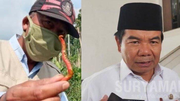 Berita Malang Hari Ini Sabtu 5 September Populer: Pembangunan Kampung Arema & Harga Cabai Anjlok