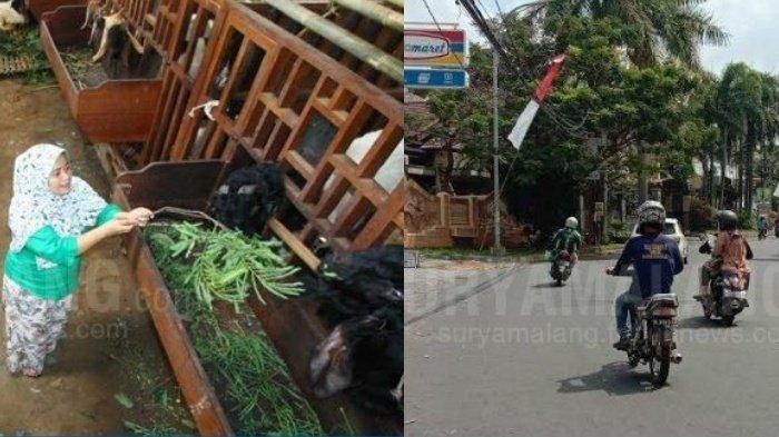 Berita Malang Hari Ini Senin 20 Juli 2020 Populer: Laporan Hewan Ternak & 2 Jambret Tertangkap Massa