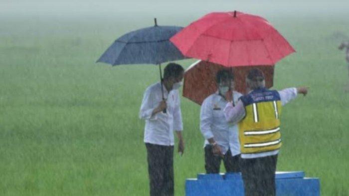 Foto Presiden Jokowi Hujan-hujanan di Sawah Jadi Sorotan, Dorong Kawasan Food Estate di Sumba Tengah