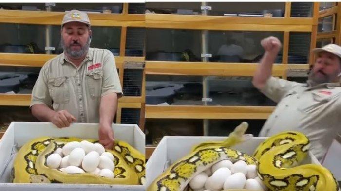 VIDEO: Pria ini Mau Ambil Telur di Tempat Ular, yang Terjadi Berikutnya Tak Terduga