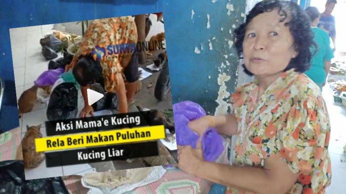 Wanita asal Madiun ini Berjuluk 'Mamae Kucing', Aktivitasnya di Pasar Sleko Jadi Viral