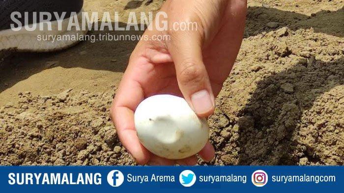 Fakta Baru Penemuan Puluhan Telur di Bantaran Bengawan Solo, Lamongan
