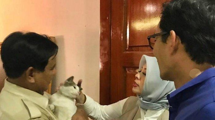 Mengenal Bobby, Kucing Milik Prabowo Subianto yang Punya 52 Ribu Follower di Instagram