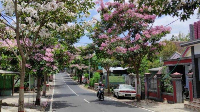 Daftar Lokasi untuk MelihatTanaman Tabebuya di Kota Blitar, Bunga Sedang Bermekaran
