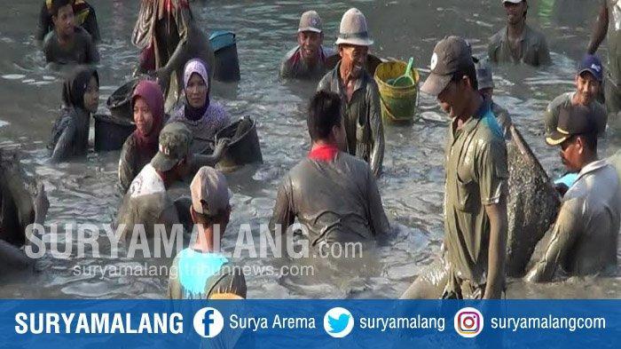Ratusan Warga Peringati Maulid Nabi Dengan Tangkap Ikan Massal Di Telaga Desa