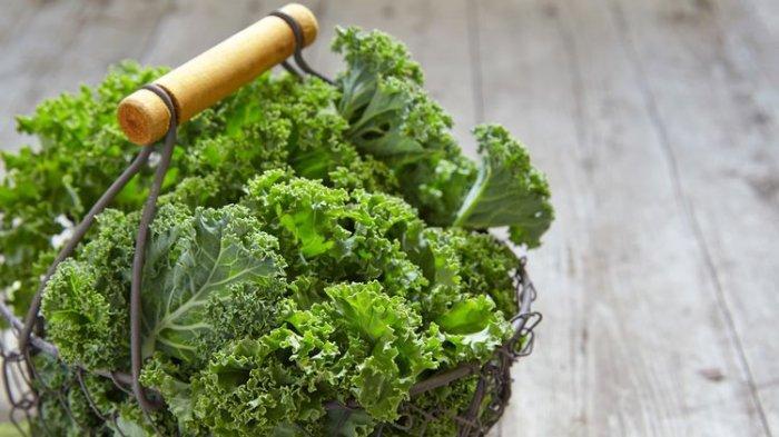 Sudah Tahu Apa itu Daun Kale ? Ini Jenis Buah dan Sayur yang Baik untuk Kesehatan Ginjal
