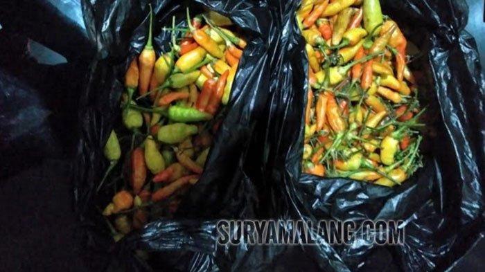 Harga Cabai Rawit di Kota Malang Capai Rp 90.000/Kg