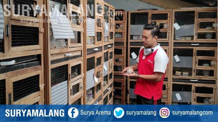 PNS di Kota Blitar Sukses Ternak Burung Puter Trah Juara, Omzet Puluhan Juta per Bulan