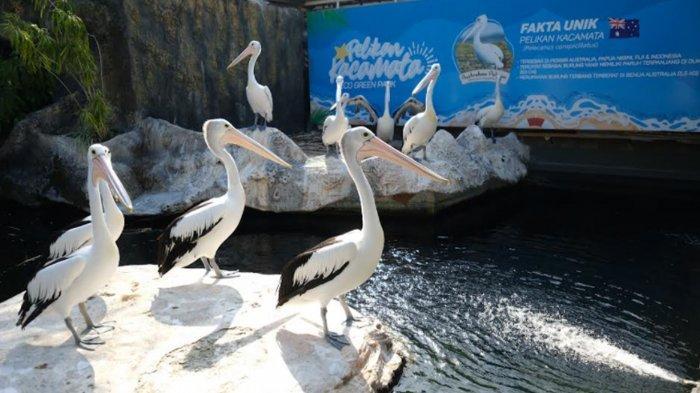 Manajemen Eco Green Park Batu Harap Ada Fleksibilitas Aturan Pembatasan Usia Masuk Tempat Wisata