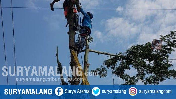 Tersengat Listrik, Pria 61 Tahun Tewas Tersangkut di Atas Pohon Randu di Kediri