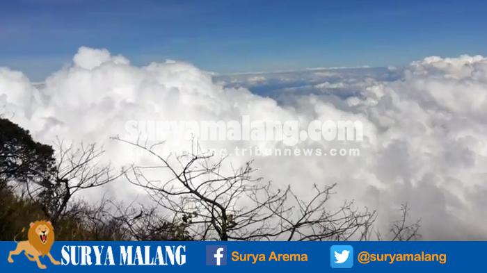 Gara-gara Ambil Kayu Panjang Umur, 10 Pendaki Kena Blacklist Mendaki Gunung Dempo