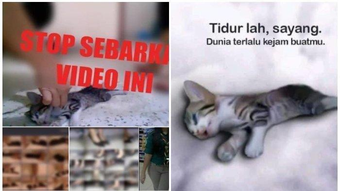 3 Wanita Cantik Injak Anak Kucing hingga Mati, Videonya Viral, Ini Fakta-fakta Terbarunya
