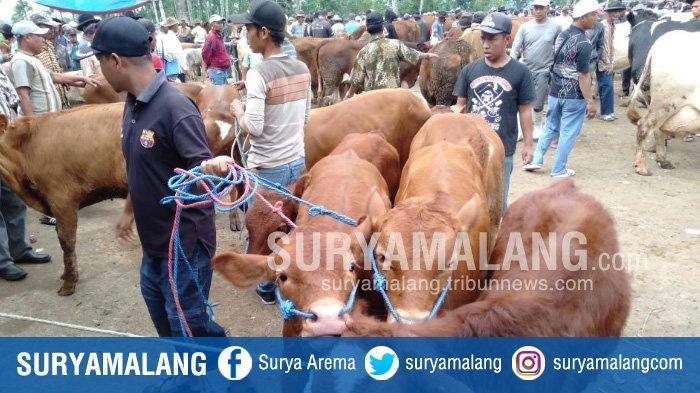 Dinas Peternakan dan Kesehatan Hewan Tak Temukan Hewan Kurban Terjangkit Anthrax di Kabupaten Malang