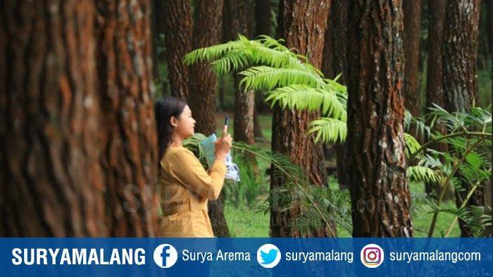 Destinasi Alami HPS, Bagi yang Ingin Merasakan Kedamaian di Hutan Pinus Pelosok Kabupaten Malang