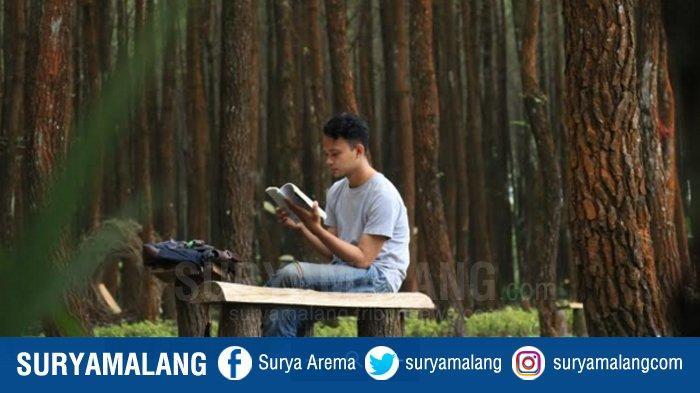 Hutan Pinus Semeru (HPS) di Desa Sumberputih, Kecamatan Wajak, Kabupaten Malang