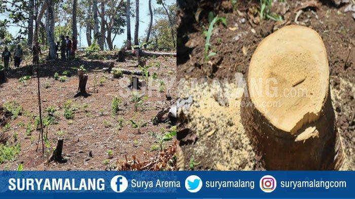 BREAKING NEWS : Hutan Lindung di Area Pantai Sendiki Malang Rusak, Profauna : Pembalakan 60 Persen !