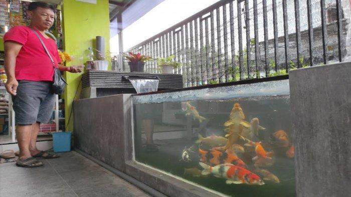 Budidaya Ikan Koi di Teras Rumah Bisa Raup Jutaan Rupiah, Warga Sentul Kota Blitar Ini Buktinya