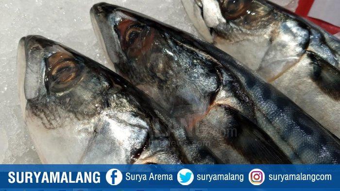 Dinas Perikanan Kabupaten Malang Akan Tambah 7 Tempat Pelelangan Ikan (TPI)