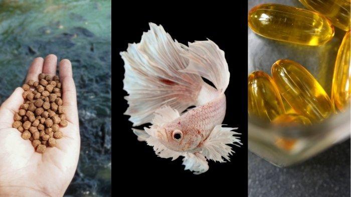 4 Jenis Makanan dan Suplemen Ikan Cupang Berkualitas Baik, Bergizi dan Kaya Protein