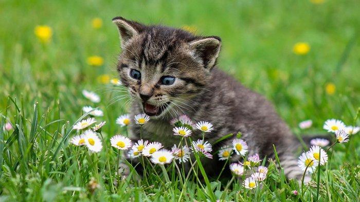 Banyak Kucing Liar Telantar Gara-gara Pemelihara hanya Mau Rawat saat Kucing Sehat dan Lucu