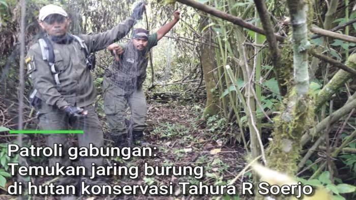 2 Jaring Perangkap Burung 15 Meter Diamankan dari Tahura R Soerjo Kota Batu