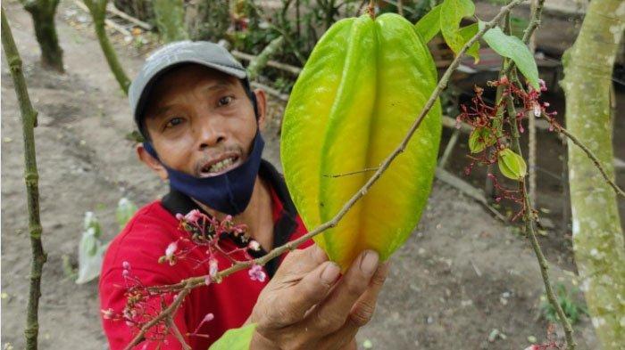 Petani Gembira Pembukaan Agrowisata Belimbing Karangsari, Kota Blitar