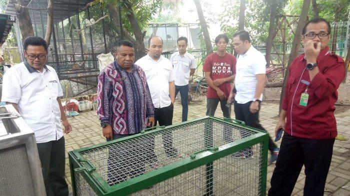 Lika-liku Penyelundupan Puluhan Komodo dari NTT ke Thailand Lewat Surabaya, Batam dan Malaysia