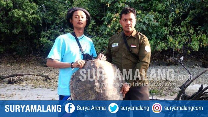 Tim BKSDA dan ProFauna Temukan Karapas Penyu di Cagar Alam Pulau Sempu