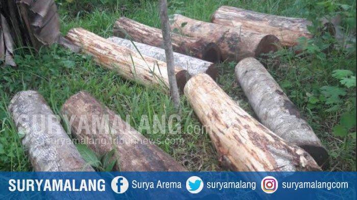 Polisi Tangkap Tersangka Penebangan Liar di Pulau Kangean, Sumenep