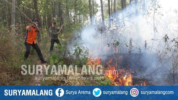 Kebakaran Hutan, Api Lahap 2 Hektar Hutan Gunungsari Kota Batu