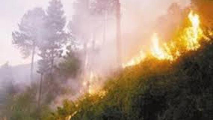 Kebakaran Hutan di Turki Disebut Seperti Neraka, Tagar #PrayForTurkey Sempat Trending di Twitter