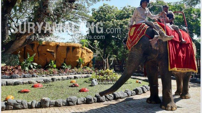 Isi Libur Lebaran, Pengunjung Padati Taman Bungkul dan Kebun Binatang Surabaya (KBS)