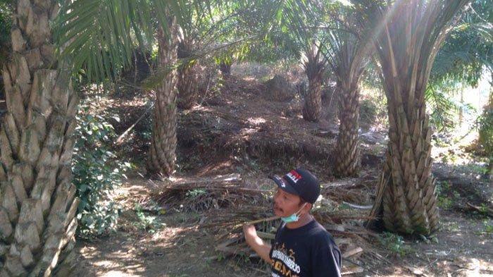 Pemkab Malang Segera Gelar Kajian Lingkungan Tentang Kelapa Sawit