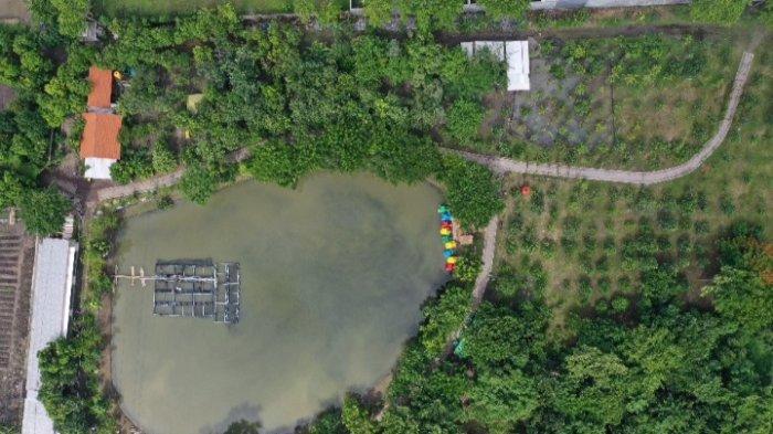 13 Tahura dan 3 Kebun Mangrove di Surabaya Siap Buka, Pengunjung Wajib Pakai Aplikasi PeduliLindungi