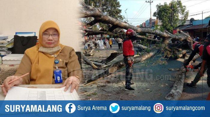 Korban Pohon Tumbang Jalan BS Riadi, Bisa Ajukan Klaim Ganti Rugi Ke DLH Kota Malang dengan Mudah