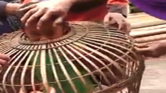 Gara-Gara Ayam Sakit, Pria Asal Gresik Ini Masuk Penjara di Lamongan