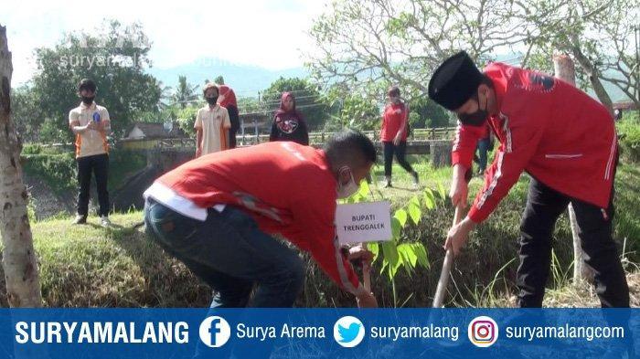Isi Rangkaian HUT PDI Perjuangan (PDIP) di Trenggalek dengan Aksi Tanam Pohon di Bantaran Sungai