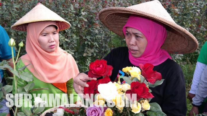 Sang Menteri Pun Bengong, Dengar Penghasilan Petani Bunga di Batu