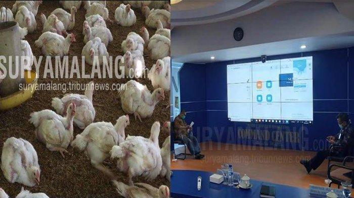 Berita Malang Hari Ini 10 April 2020 Populer: Harga Ayam Anjlok Peternak Kosongkan Kandangnya