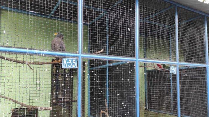 Dana Operasional Mulai Menipis, Madiun Umbul Square Kesulitan Beri Pakan Satwa