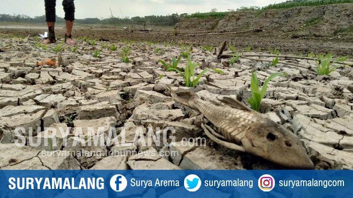 Daftar Daerah di Malang Raya yang Terancam Alami Kekeringan Selama Musim Kemarau