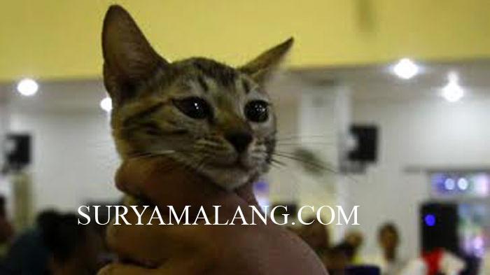 6 Penyebab Kucing Mengeong pada Malam Hari