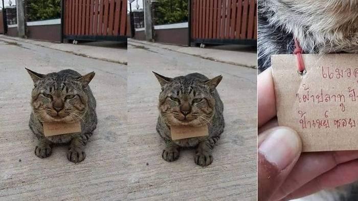 Viral Kucing Hilang 3 Hari Pulang Bawa Catatan Utangnya, Raut Wajah Penuh Penyesalan Bikin Gemas