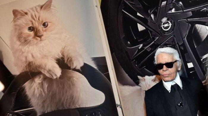Seekor Kucing Di Perancis Bakal Warisi Kekayaan Majikanya Senilai Rp 2,8 Triliun, Bisakah?