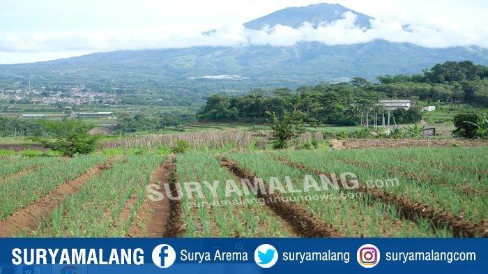 Perlu Regulasi untuk Batasi Barang Impor Masuk Kota Batu, Penting Untuk Lindungi Petani